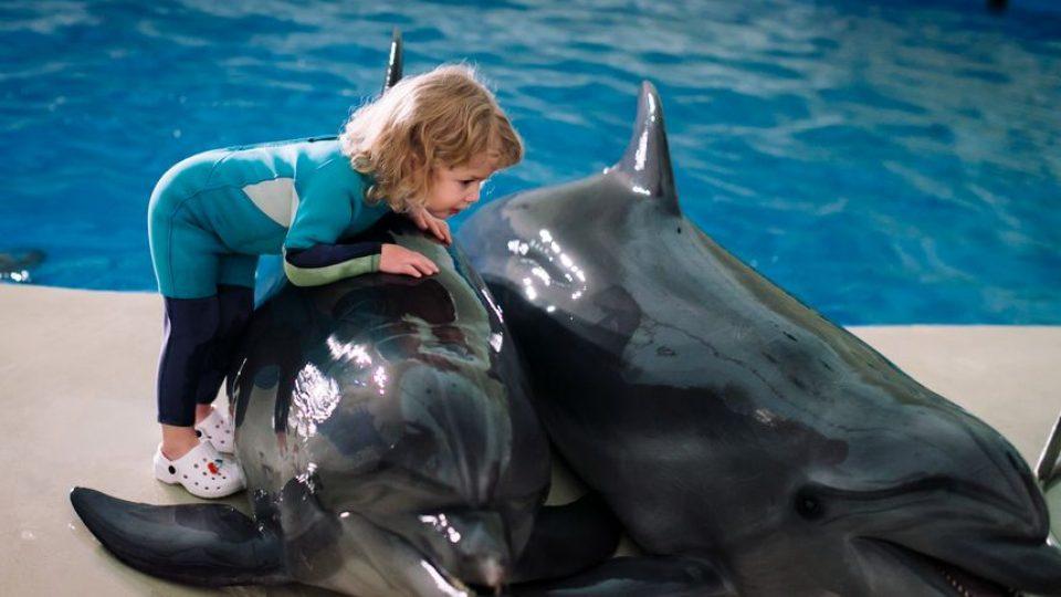 Детей с задержкой речи – к дельфинам